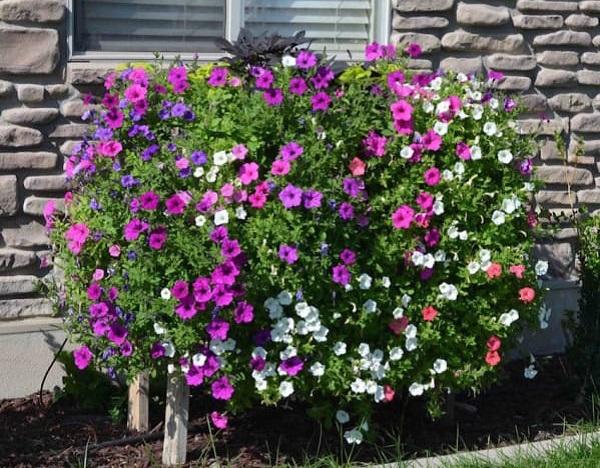 Как превратить обычный сад в предмет гордости