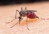 8 шокирующих фактов о комарах, которые нужно знать каждому