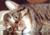 19 бесподобных котов, которые родились, чтобы прославиться. Без улыбки смотреть невозможно!