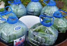 Огурцы в бутылке - новый тренд у огородников. Просто, быстро и выгодно! На балконе можно, семена уже прикупила!