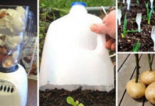 15 советов для садоводов. Пусть твоему участку завидуют все соседи