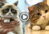 Усатые-полосатые: самые популярные котики Интернета