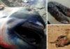15 таинственных существ, выброшенных из океана на берег