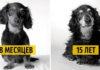 Как взрослеют собаки. Любопытный и трогательный фотопроект