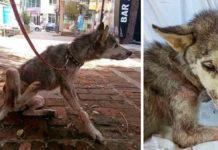 На асфальте лежала полуживая собака, скрывая под животом самое ценное сокровище