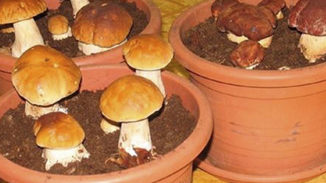 Нашли в лесу несколько белых грибов, но вместо того, чтобы их приготовить, сделали это… Читай скорее!