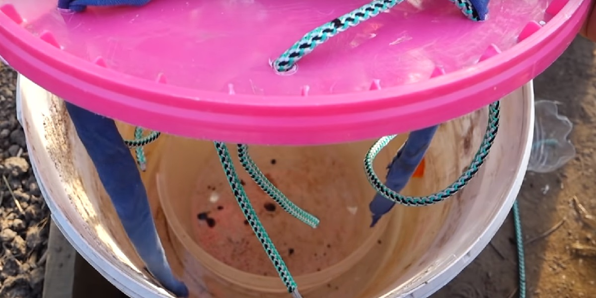 Как вырастить огурцы на воде: новый эффективный метод