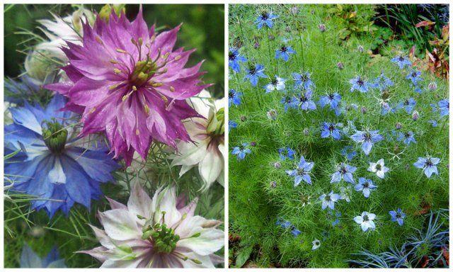 30 ярких цветов, которые можно сеять в открытый грунт в мае