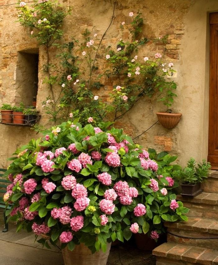 Почему стоит посадить гортензию в своем саду