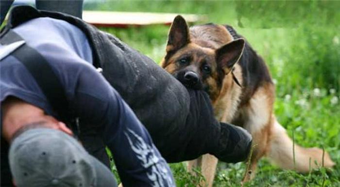 Как поступать, если напала собака: Пошаговая инструкция, которая спасет жизнь