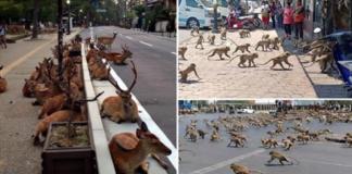 11 фотографий тех, кто стал хозяевами городов, пока люди сидят в изоляции