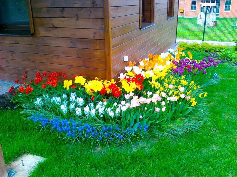 """Чудесные цветы для """"ленивого"""" и красивого цветника на даче"""
