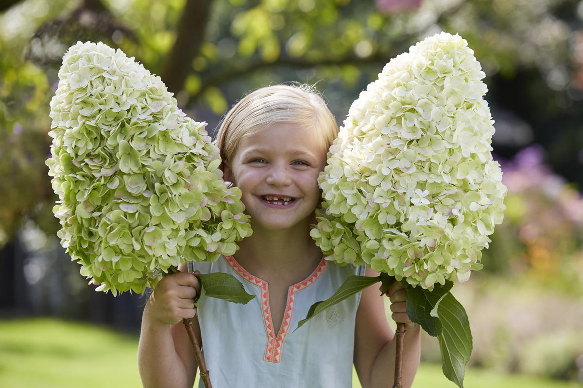 Гортензия - сказка в вашем саду