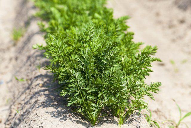 Что можно посеять и посадить в огороде в апреле