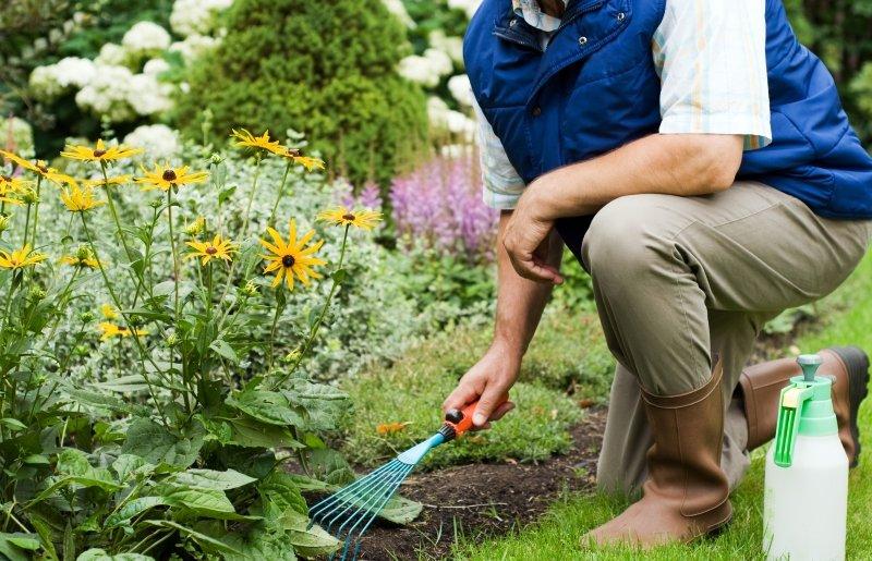 Стоит ли подкармливать клубнику дрожжами для хорошего урожая