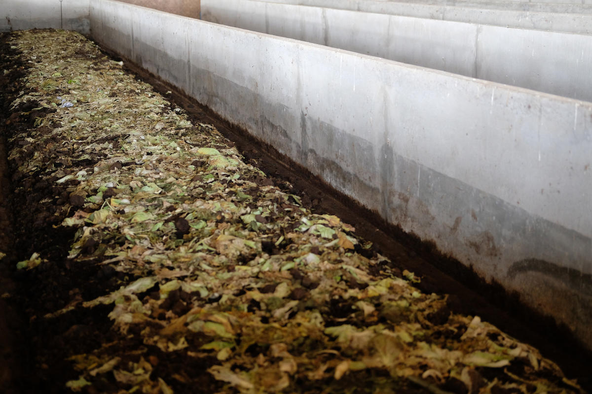 Как сделать биогумус на даче и в домашних условиях