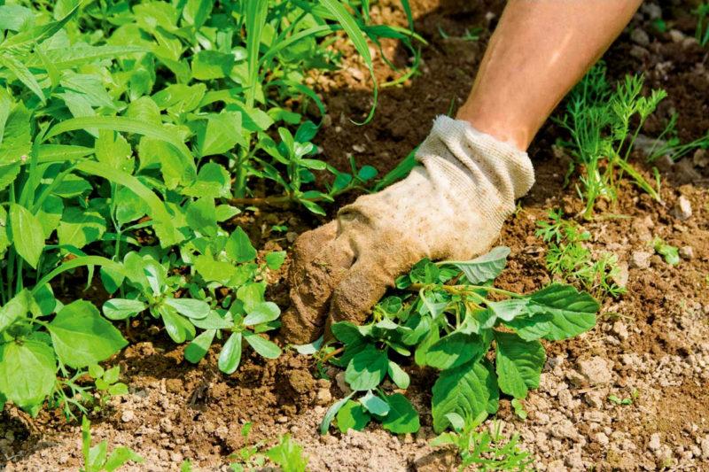 9 самых эффективных способов борьбы с сорняками без химии