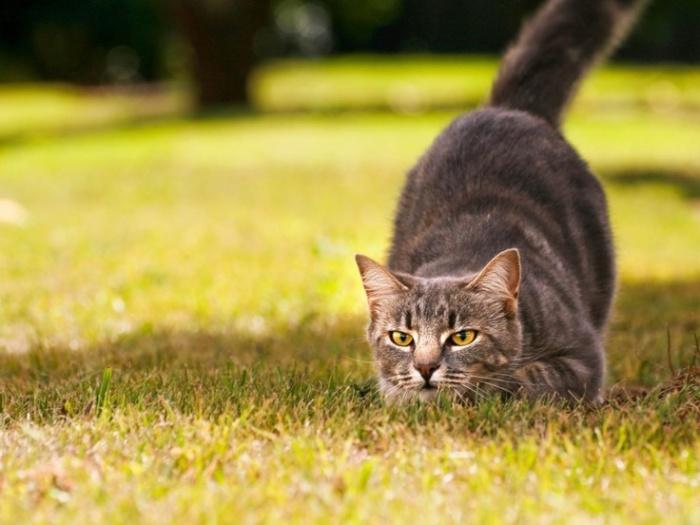 Зачем кошки приносят свою добычу хозяевам, и как правильно поступить в такой ситуации