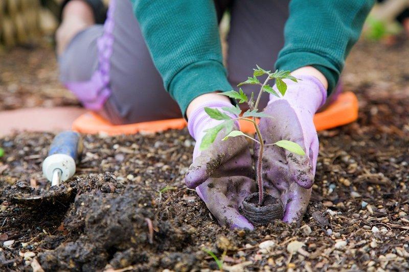 Подборка хитростей для огородников