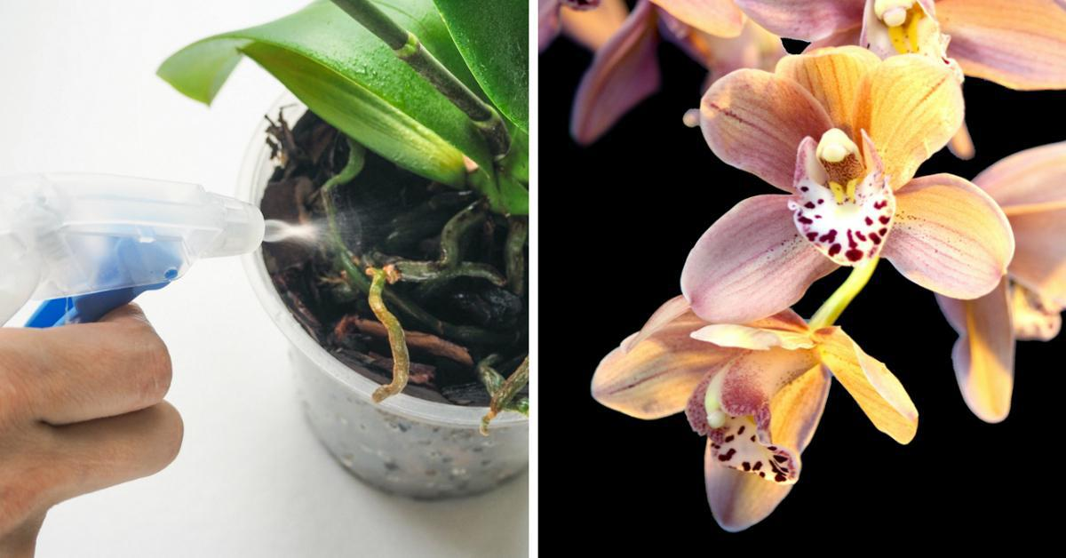Хитрости ухода за орхидеей