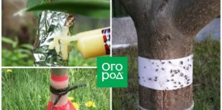 Ловчий пояс для защиты деревьев: когда накладывать и снимать, как сделать самому